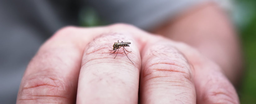 13 HOME REMEDIES FOR MOSQUITO BITES